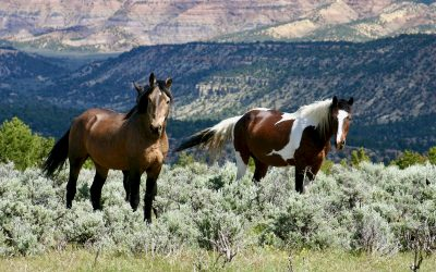 Interior Secretary to visit Colorado, fate of BLM location on the table